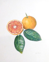 Blood Orange (colored pencil painting)