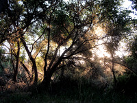 Early morning Kern River Preserve